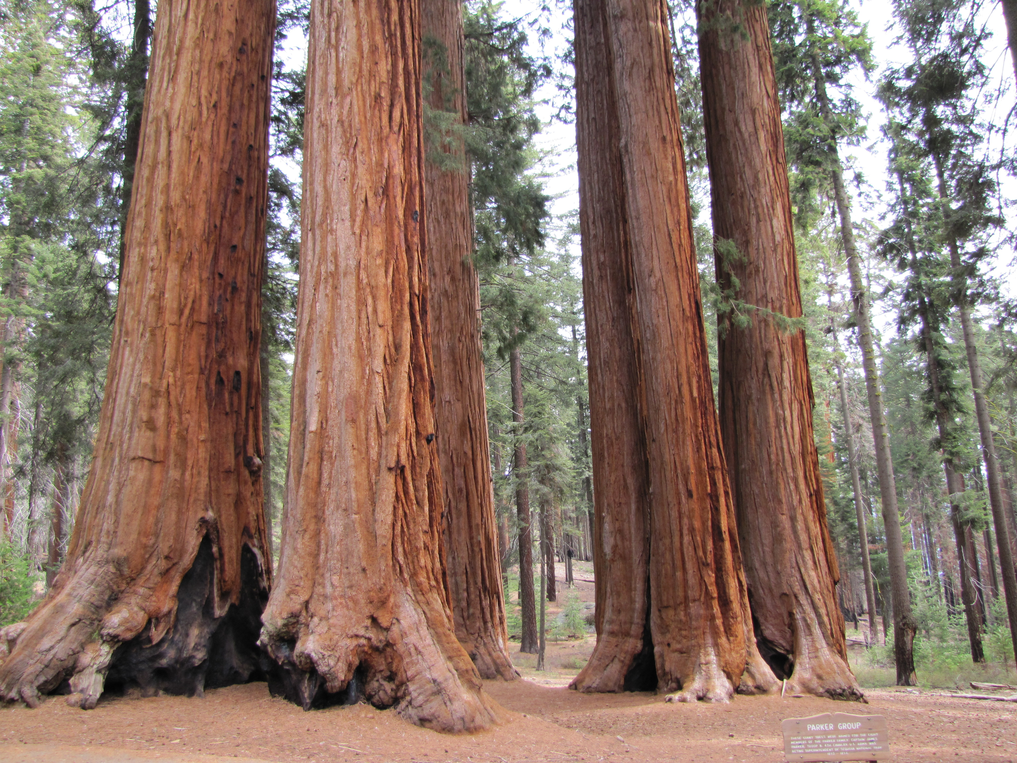 Sequoia National Park Rv Road Trip Six States In Three